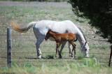 April 5th 2011 - Horses - 2017.jpg