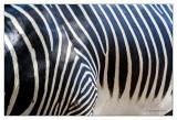 animals-6972 web.jpg