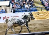 A Proud Bull