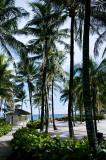 Palm Trees at Atlantis
