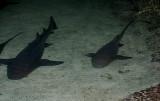 Sleeping Sharks