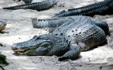 Alligator Farm Zoo