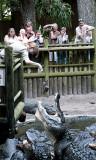 Stephanie Feeding Them Gators