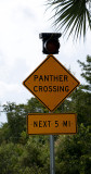 The (Alleged) Panther Crossing