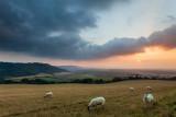 Woolly Sunset