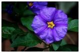 flores mazamitla.jpg