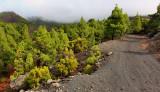 Walking on La Palma, Canary Islands.