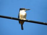 Kingfisher 7 (SP570UZ)