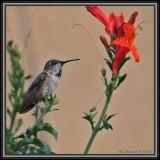 A Humming Bird Ponders EROI - Energy Return On Investment