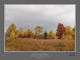 Dolly Sods Fall Mixture.jpg