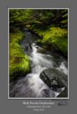 Slide Brook Headwaters.jpg