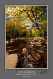Red Creek Autumn 161004.jpg