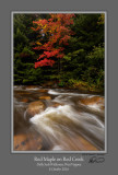 Red Maple Red Creek 1.jpg