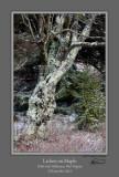 Lichen on Maple RGB.jpg