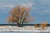 Fair Haven's Winter Golds