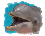 BOTTLE-NOSE DOLPHINS