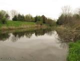 Amphibian Pond at the Fletcher Wildlife Garden