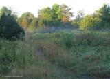 Old Field at the Fletcher Wildlife Garden