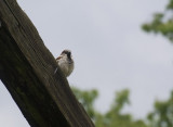 Bird on a lost tin roof