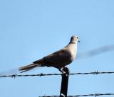 Mac's Birds