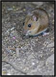 mouse jpg.jpg