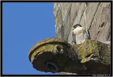 Brecon Bird 2.jpg