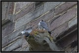 Brecon Bird.jpg