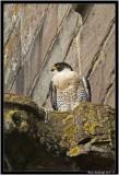 Brecon Birds 3.jpg