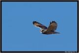 s e owl 2.jpg