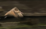 High speed godwit