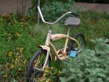 botanical bike yellow.jpg