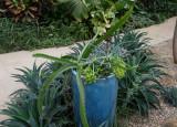 cactus and blue pot.jpg