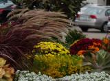 fall flowers in a stiff wind