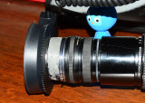 Old Novoflex bellows lens reversed on 200mm F4 Nikkor.