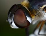 Unknown fly portrait