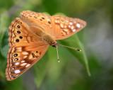 Gallery: Just butterflies