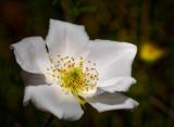 Backyard flowers (wild and domesticated)