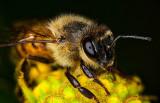 Honey bee three shot hand held stacked in serene stacker.