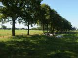 Beekvliet (2)