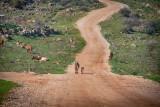 Galilee & Golan Heights