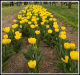 Tulip Festival Holland, MI