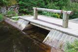 2T1U6612.jpg - Algonquin Provincial Park, ON, Canada