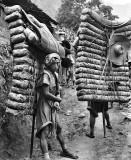 1908 - Men carrying tea