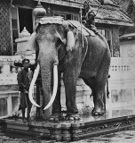 A royal white elephant in the Grand Palace
