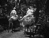 1908 - On horseback