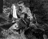 c. 1915 - Bandages received from the kit of a dog