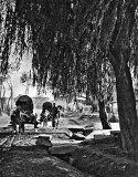 1879 - Carts on the road to Beijing