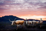 A composite of longhorns and Big Bend National Park.