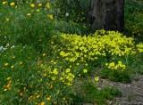 flower base.jpg