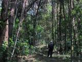 magical path.jpg